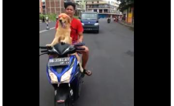 manado dog lovers
