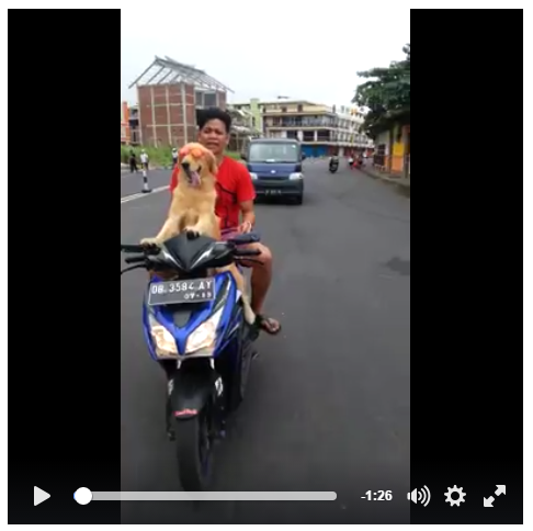 manado dog lovers